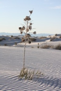 Nationalpark White Sands in New Mexico, USA