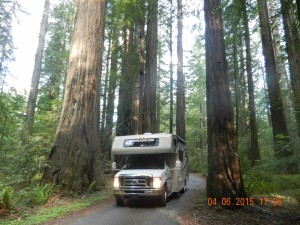 Avenue of the Giants Humboldt State Park Kalifornien