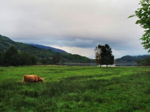Scotish Highlands